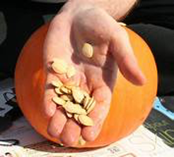 hand holding seeds in front of a pumpkin